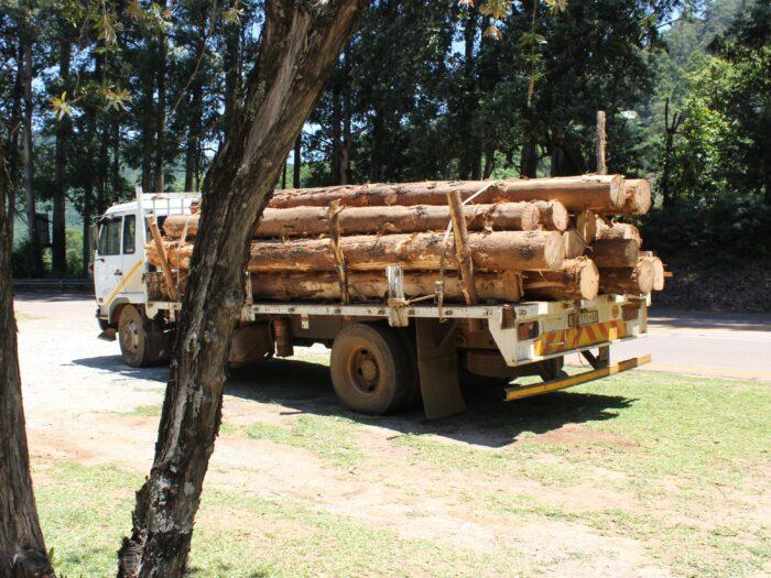 túlméretes szállítás fa szállítmány